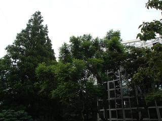 P7111003.jpg